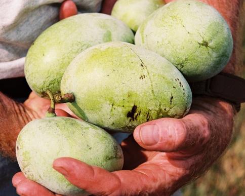 fruit snel rijpen
